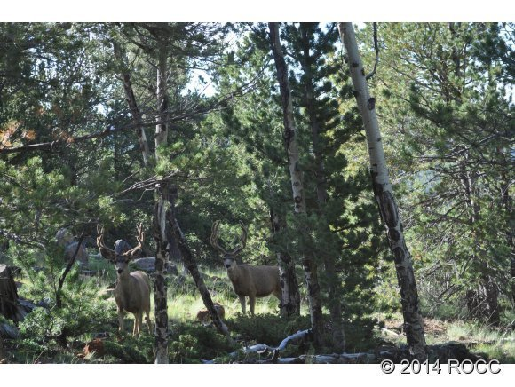 2265 Cr 358, Westcliffe, CO, 81252: Photo 2