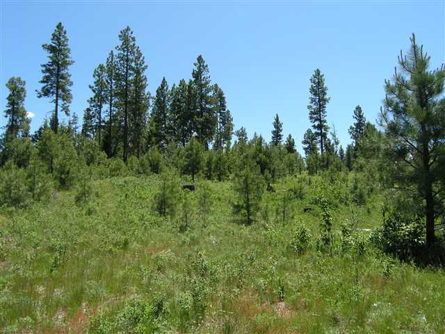Lot 1 Arlington Heights, Cascade, ID, 83611 -- Homes For Sale