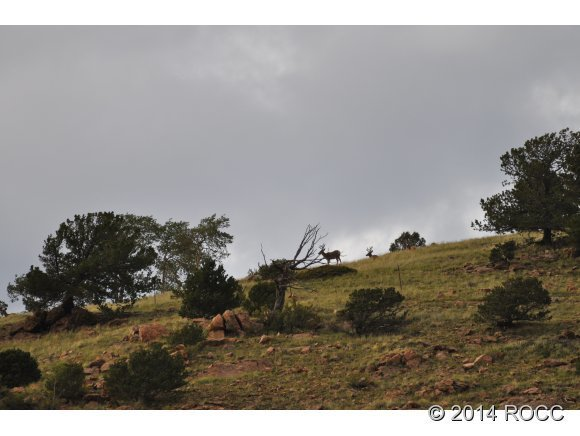 2265 Cr 358, Westcliffe, CO, 81252: Photo 5