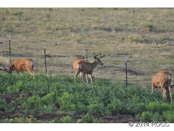 2265 Cr 358, Westcliffe, CO, 81252: Photo 24