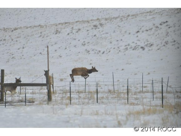2265 Cr 358, Westcliffe, CO, 81252: Photo 9