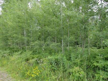 0 Hwy 32, Wabeno, WI, 54566 -- Homes For Sale