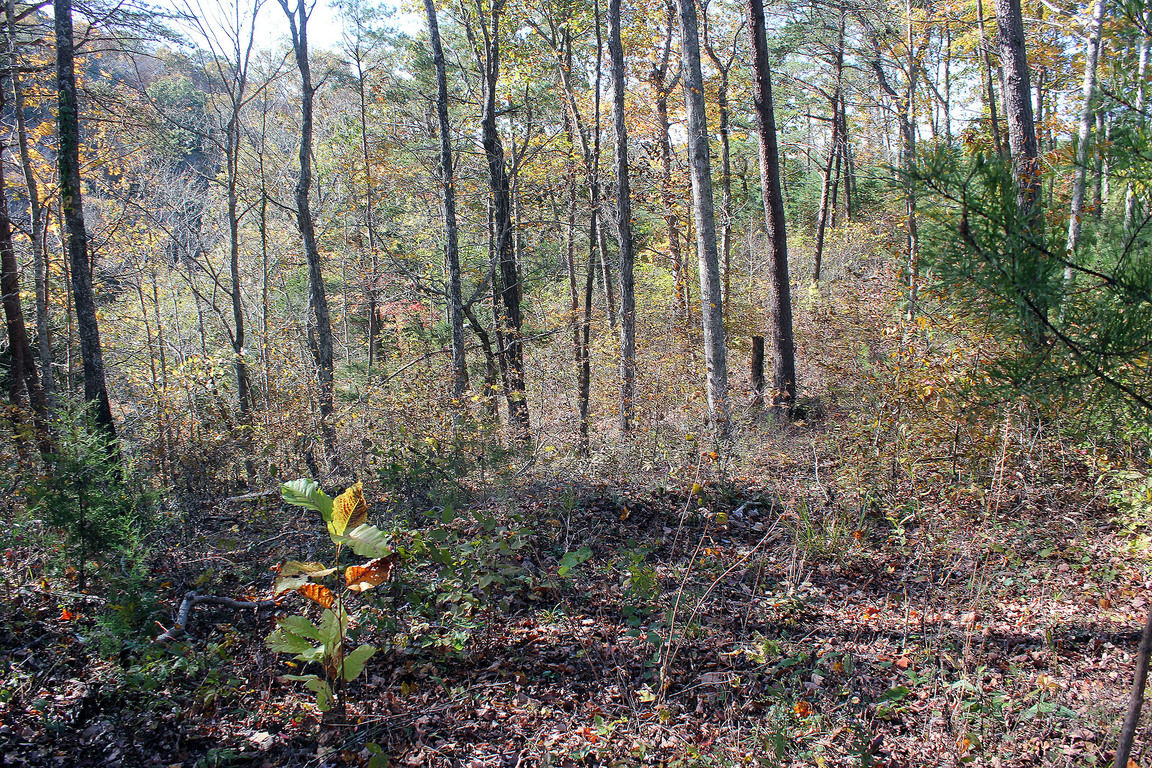 Land for sale: $5,900 125 Sandstone Point, Monticello, KY 42633