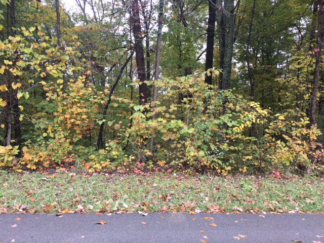 LOT 123 WOODLAND DRIVE Mammoth Cave KY 42259 id-247974 homes for sale