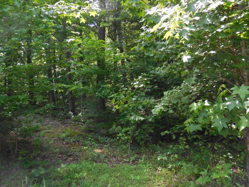 E SHORE LOT 63 63 Rockwood TN 37854 id-511034 homes for sale