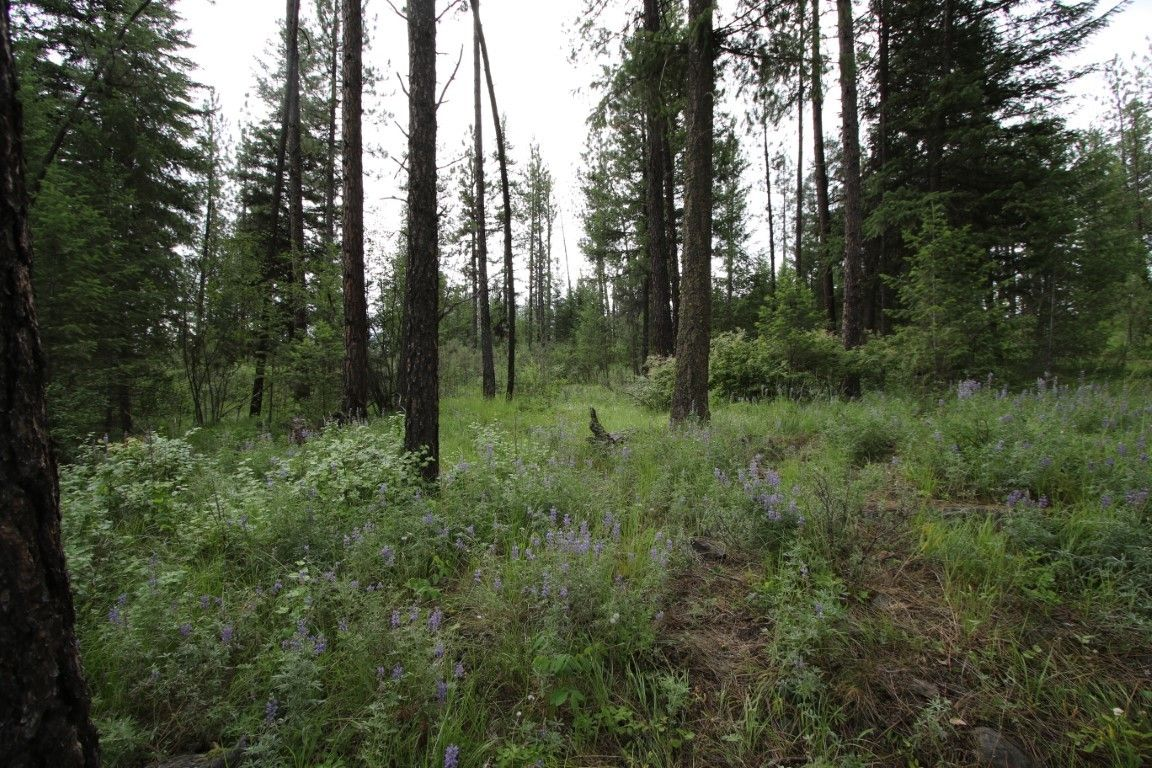 6960 MT HWY 200 Plains MT 59859 id-813449 homes for sale