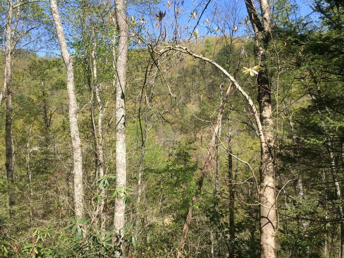 WILDCAT RIDGE LOT 26 Sevierville TN 37862 id-467449 homes for sale