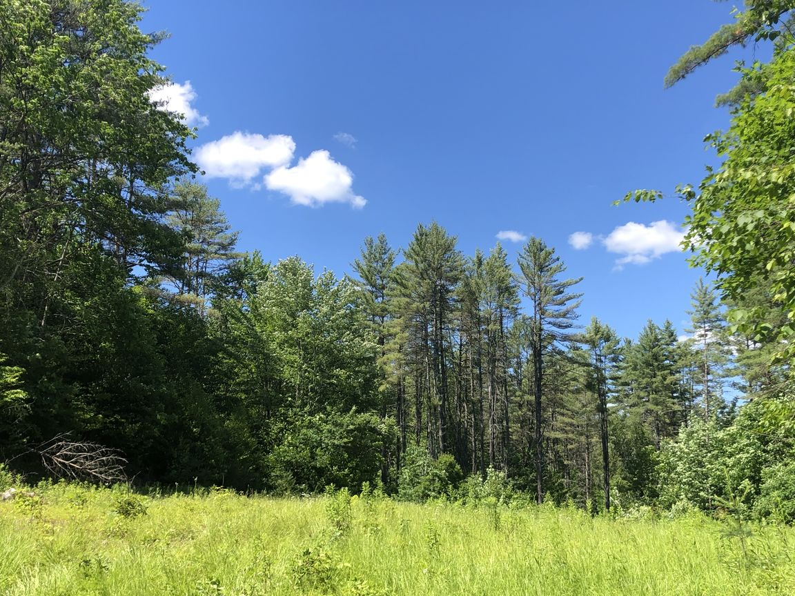 Lot In Rices Mills