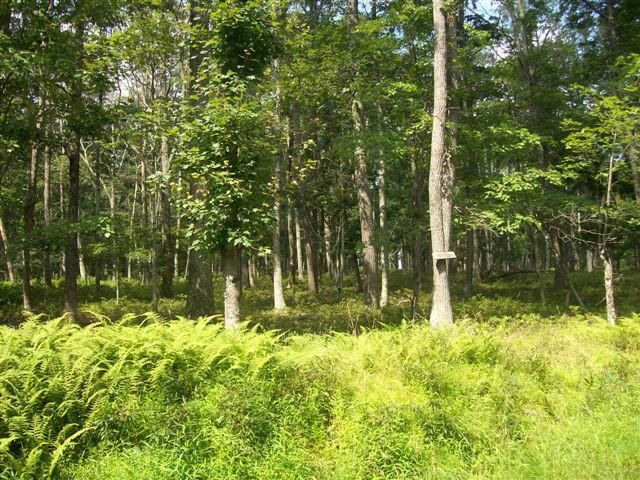 Lot In Tamiment