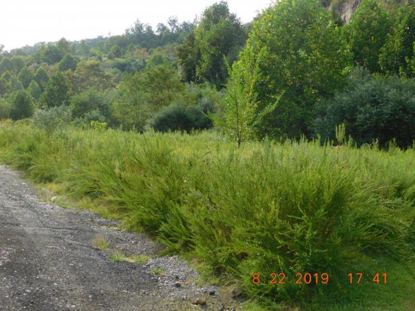 Lot In Clintwood