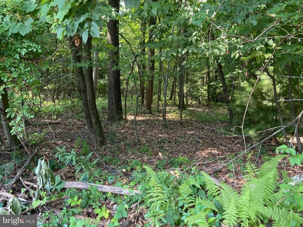 Lot In Schuylkill Haven