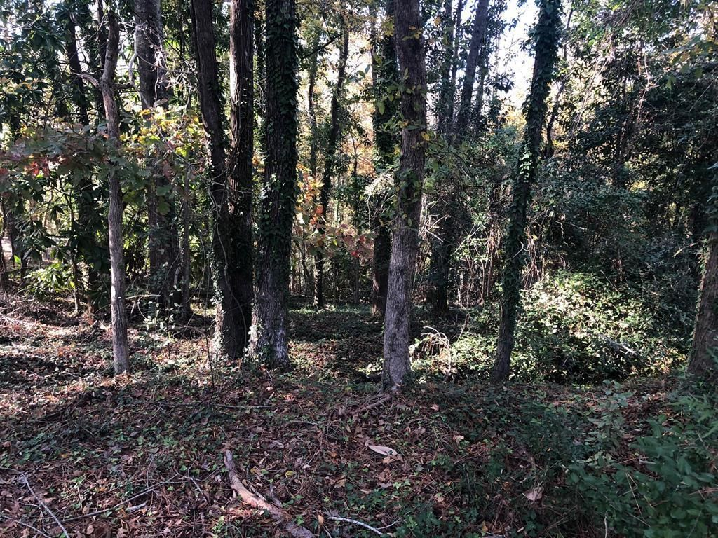 Lot In Shirley Hills