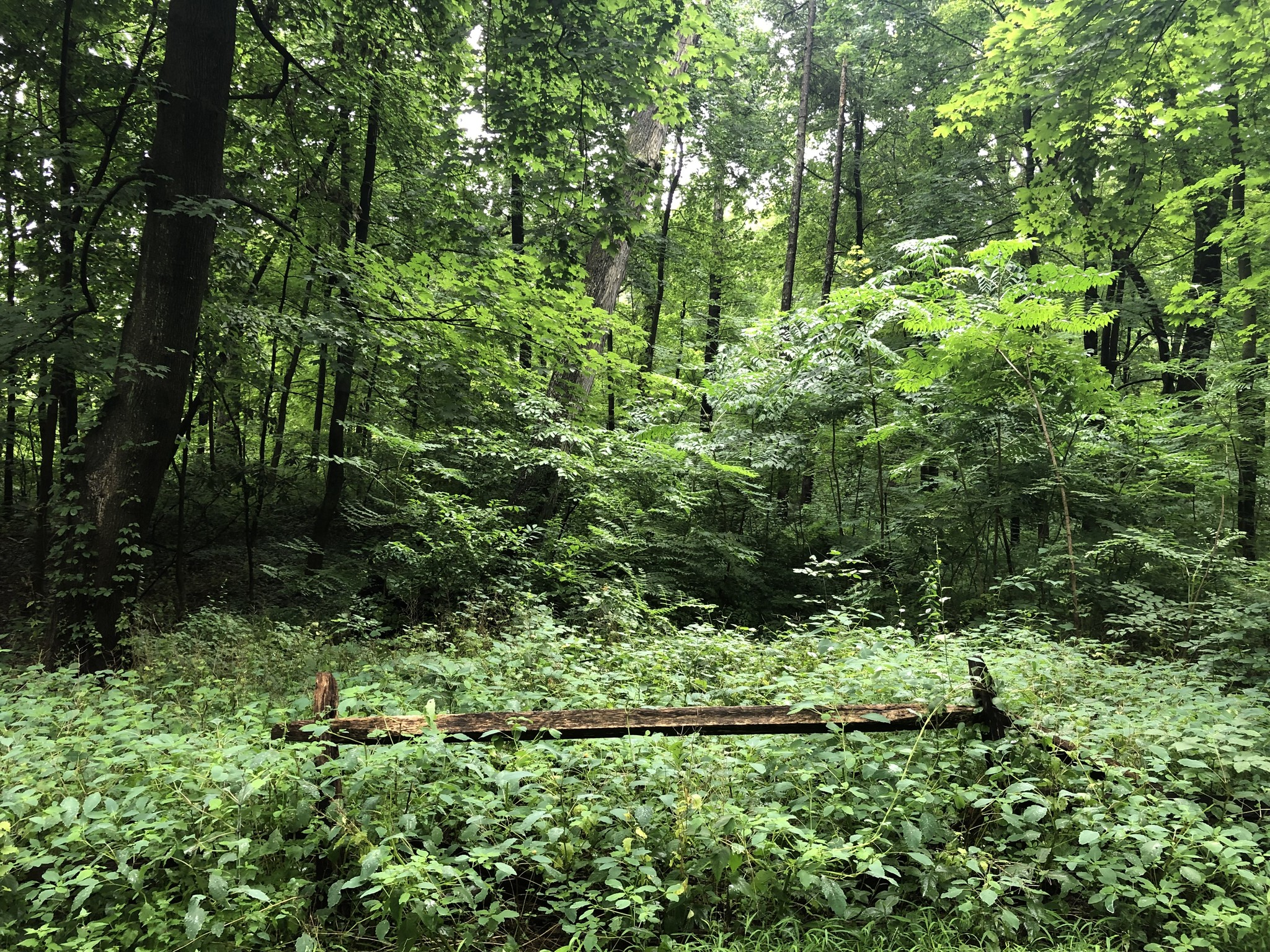 Lot In Westerleigh