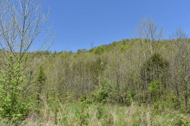 Land For Sale In Bell County Ky Homes Com