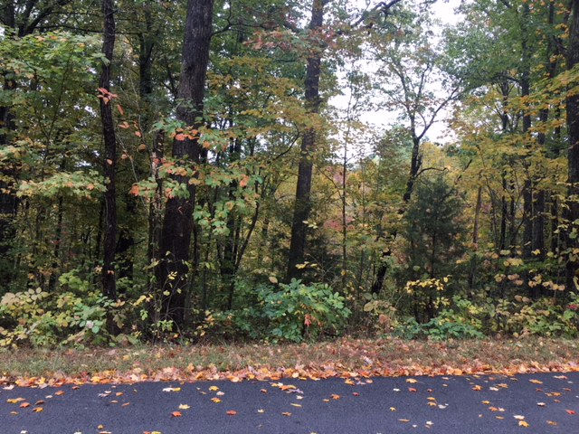 LOT 125 WOODLAND DRIVE Mammoth Cave KY 42259 id-247972 homes for sale